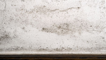 What Types of Damp can Affect a Home?